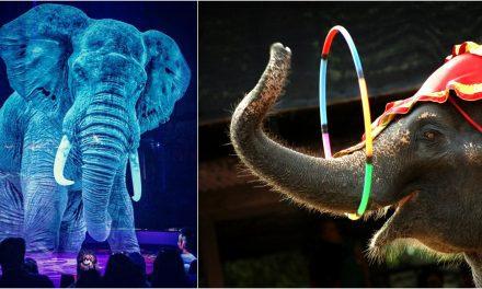 INCREÍBLE ESPECTÁCULO | Circo alemán sustituye a los animales por hologramas en tres dimensiones (VÍDEO)