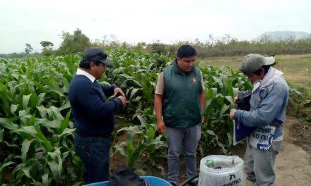 Internet satelital beneficiará al sector agricultor en La Libertad
